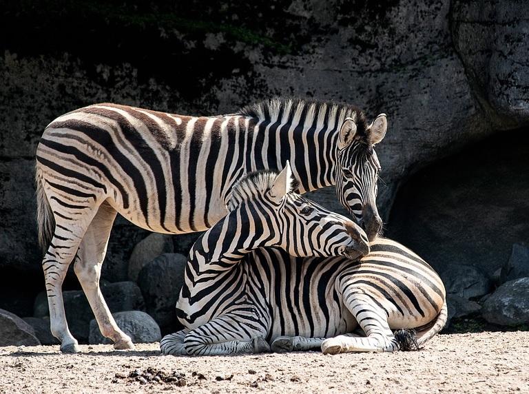 Ir al zoológico de Amsterdam